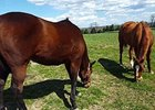 Wise Dan and Successful Dan Grazing