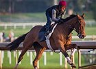 Beholder training at Santa Anita Park