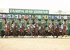 Tampa Bay Downs is set for two days of summer racing.