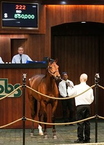 Hip 222 by Twirling Candy for $850,000