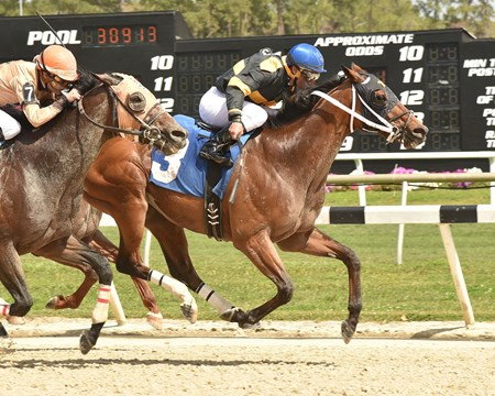 Adirondack King is crowned the victor in the Challenger Stakes at Tampa Bay Downs.