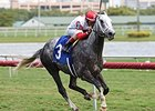 Smokem Kitten Makes the Grade in Miami Mile
