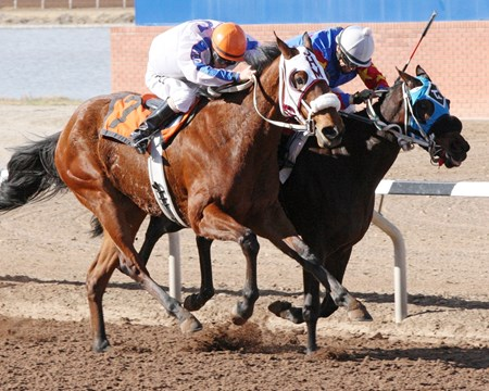 Gold Boundry shines in the Red Hedeman Stakes at Sunland Park.