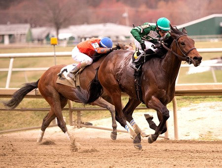 Abiding Star shines in the Private Terms Stakes at Laurel Park.