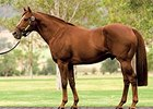 Top Sire Hussonet Dies at Age 25