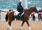 California Chrome at Meydan March 22