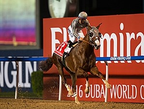 California Chrome wins the 2016 Dubai World Cup.