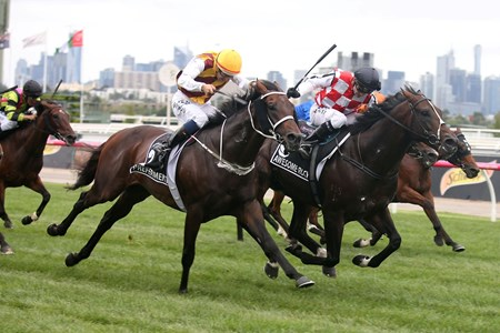 Trainer Chris Waller sent out Preferment (Zabeel) to a third group I victory in the $1.5 million Australian Cup (Aus-I) at Flemington Racecourse.