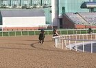 Dubai World Cup: Morning Training 03/24 Part 2