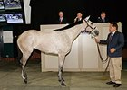 The Factor Colt Tops Barretts Sale
