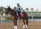 Dubai World Cup: Morning Training March 24 Part 1