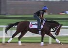 Dubai World Cup: Horses Training March 23 - Part 1