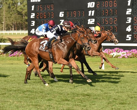 Amerman Racing's Baciami Piccola made the best of her first U.S. start at Tampa Bay Downs, where she closed widest of all in the stretch to win the $155,000 Florida Oaks (gr. IIIT).
