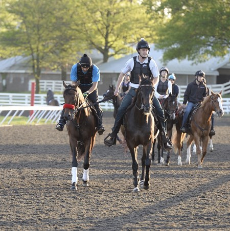 Nyquist jogs on the Keeneland training track April 28