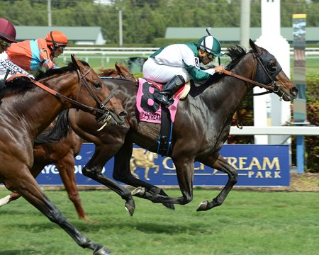 Reporting Star wins last year's Appleton Stakes