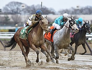 Salutos Amigos (left) and Calculator both earned 117 Equibase Speed Figures when they fought out the finish of the Carter Handicap