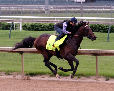 Exaggerator with Kent Desormeaux work five furlongs in 1:02.60 at Churchill Downs on April 30, 2016.