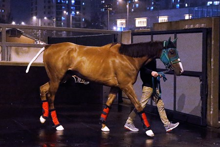 Nuovo Record arrives at Sha Tin April 15, 2016