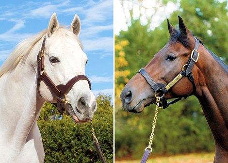 Derby Battle Tapit Vs Uncle Mo Bloodhorse