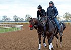 "Nyquist jogged twice around the main track at Keeneland.<br><a target=""blank"" href=""http://photos.bloodhorse.com/AtTheRaces-1/At-the-Races-2016/i-KLv2Fms"">Order This Photo</a>"