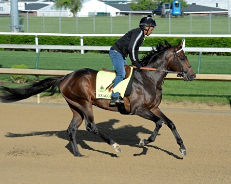 Exaggerator on track at Churchill Downs in Louisville, Ky., on April 29, 2016.