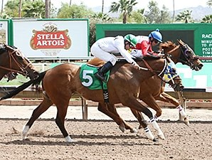 Wildcat Moon wins the Honest Mac Stakes
