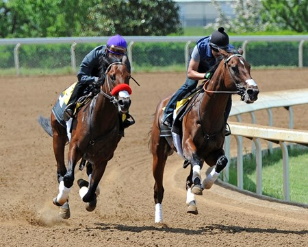 (Lexington, Ky) Florida Derby winner and probable Kentucky Derby favorite Nyquist, outside, Mario Gutierrez up, works 1 mile in 1:41 Friday afternoon, April 29 at Keeneland with stablemate Ralis.