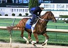 Gun Runner Gets to Work at Churchill Downs