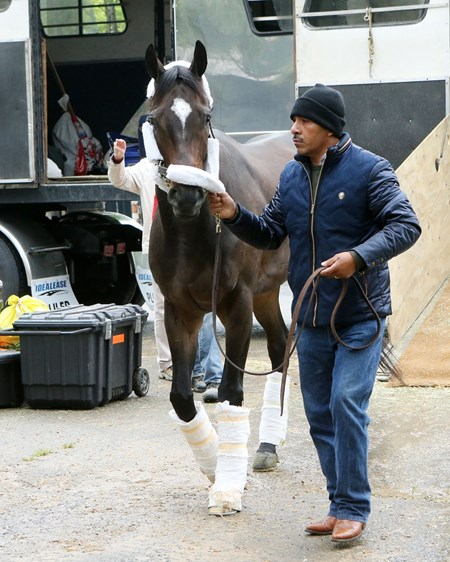 Melatonin arrives as Oaklawn Park April 13.
