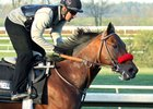Nyquist Gallops, 'Couldn't Look Any Better'