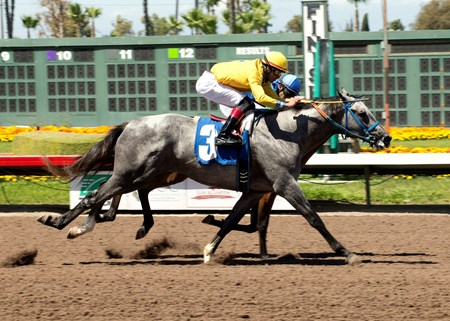 Milton Freewater (outside) - Maiden Win, April 22, 2016 (Creative Cause - Lovehi, by Swiss Yodeler)