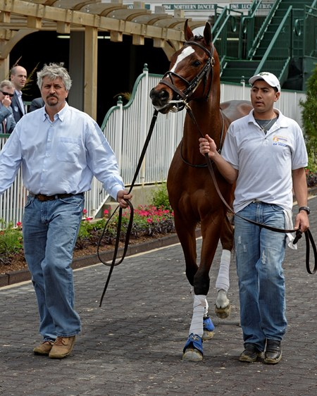 Schooling on 4/29/14: Untapable schooling with trainer Steve Asmussen left Kentucky Oaks day at Churchill Downs in Louisville, Ky., on May 3, 2014.