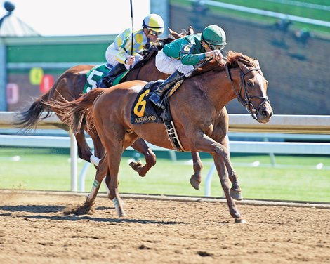 Eagle And Scuba Head Hawthorne Gold Cup Return Bloodhorse