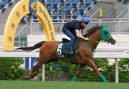 Nuovo Record trains at Sha Tin April 21, 2016