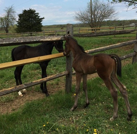 Bay colt out of Marietta's Charm is the first reported foal by J J's Lucky Train.