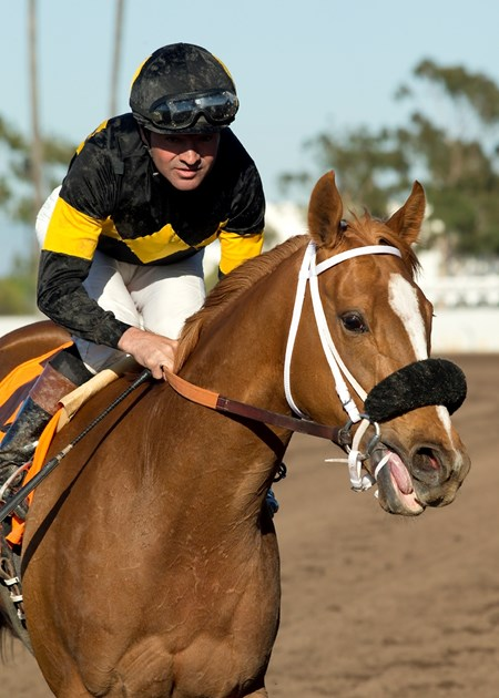 Jockey Kent Desormeaux guides Finest City to the winner's circle after their victory in the Grade II, $200,000 Great Lady M Stakes, Saturday, April 23, 2016 at Los Alamitos Race Course, Cypress CA.