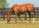 Littleprincessemma is National Broodmare of the Year