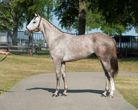 Tapit Colt Late Obs Withdrawal Bloodhorse