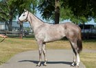 Tapit Colt Late OBS Withdrawal