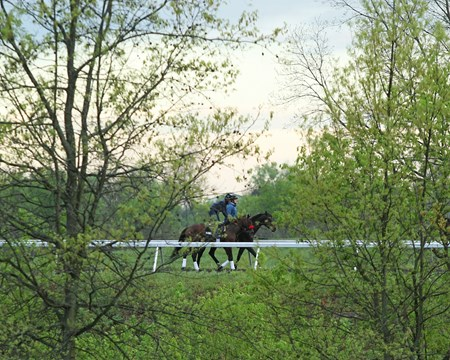 Nyquist trains at Keeneland April 22, 2016