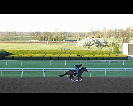 Nyquist training at Keeneland on the morning of April 13.