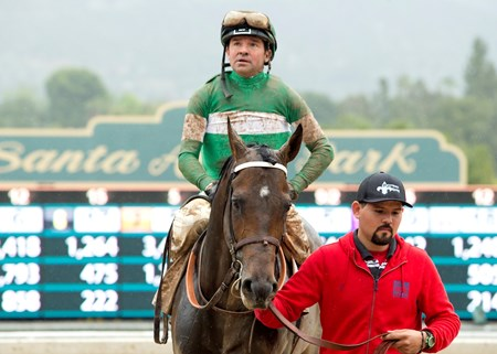 Exaggerator and jockey Kent Desormeaux are guided to the winner's circle after their victory in the Grade I, $1,000,000 Santa Anita Derby, Saturday, April 9, 2016 at Santa Anita Park, Arcadia CA.