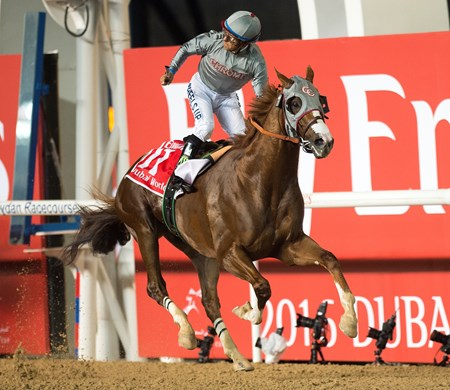 California Chrome and jockey Victor Espinoza win the Dubai World Cup at Meydan Racecourse on March 26, 2016.  Photo by: Mathea Kelley/Dubai Racing Club
