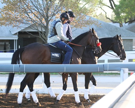 Nyquist - Morning Training Keeneland, April 17, 2016 Trainer: Doug F. O'Neill Owner: Reddam Racing LLC Breeder: Summerhill Farm