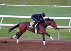 Nyquist Breezes Five Furlongs at Keeneland