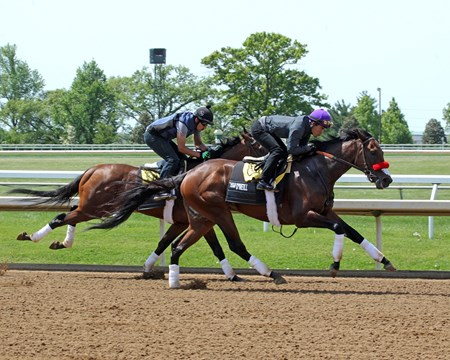 Nyquist (OUTSIDE) - Ralis - (INSIDE) - Afternoon Workout - Keeneland - 042916  Nyquist Trainer: Doug F. O'Neill Owner: Reddam Racing LLC Breeder: Summerhill Farm  Ralis Trainer: Doug F. O'Neill Owner: Reddam Racing LLC Breeder: Reddam Racing LLC