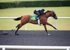 Shackleford Colt Flashes Speed in OBS Work