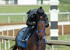 Cathryn Sophia training at Keeneland