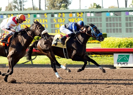 #4 BOOZER (Edwin Maldonado) $100,000 Bertrando Stakes Owner: Al & Sandee Kirkwood Trainer: Mark Glatt Los Alamitos Race Course Cypress CA Saturday, April 16, 2016 © BENOIT PHOTO