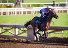Exaggerator Logs Final SoCal Derby Workout